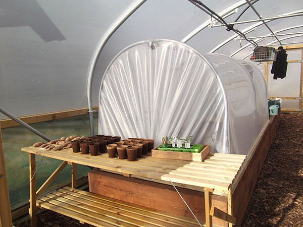 Mini Polytunnel inside a Polytunnel