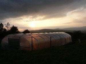 A Polytunnel in Winter