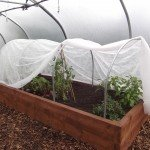 Cloche hoops inside a Polytunnel