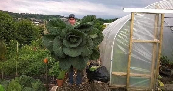 Natural healing: Anti-inflammatory cabbage compress