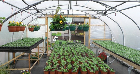 What could a Polytunnel do for you?