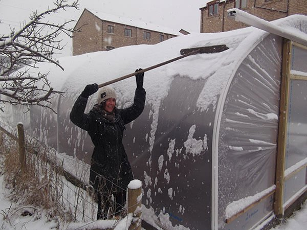 Sweeping snow off a Polytunnel
