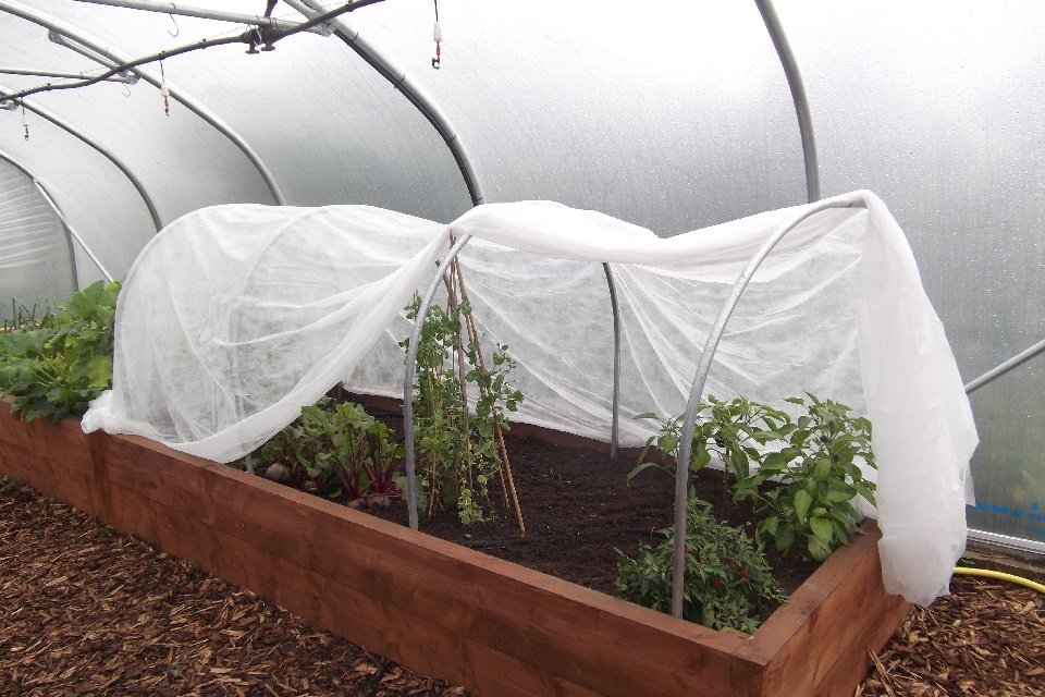 cloche hoops in a raised bed with horticultural fleece