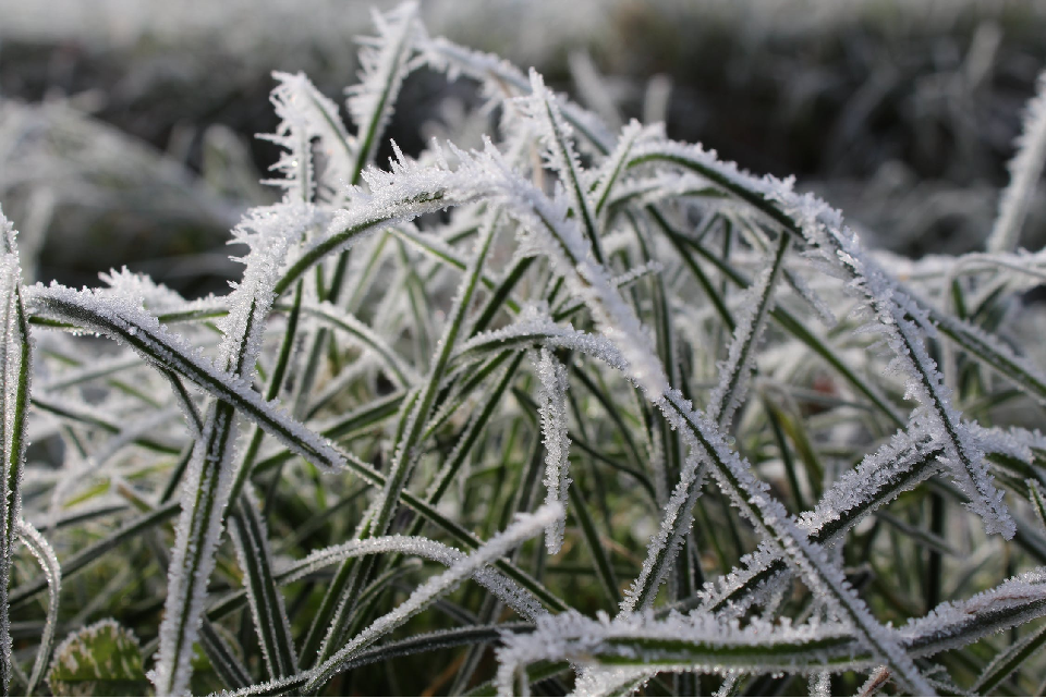 plants covered in frost