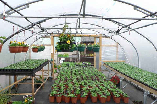 polytunnel full of seedlings and flowers