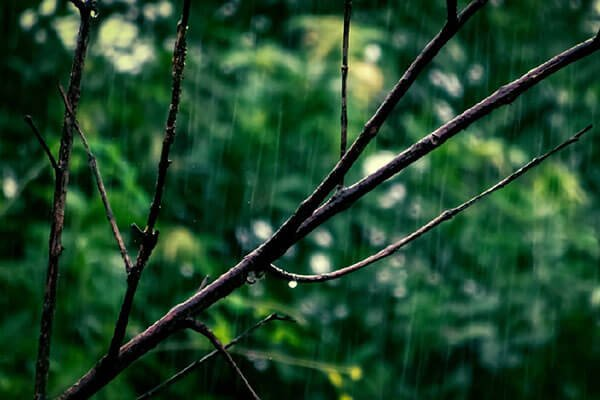 rain falling around tree branch