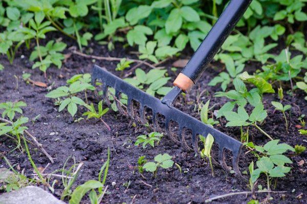 black rake