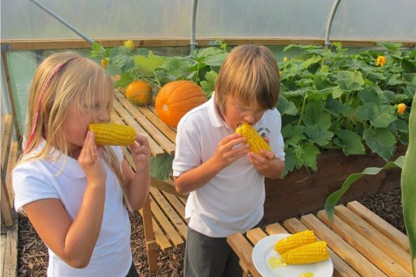 children eating sweetcorn