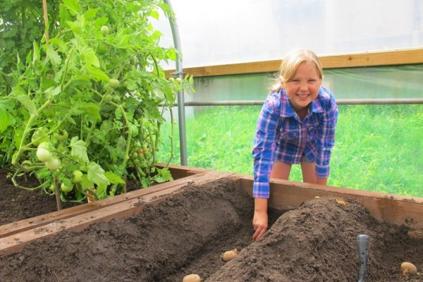 girl planting potatoes in apolytunnel