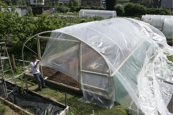 polythene cover being pulled onto a polytunnel frame