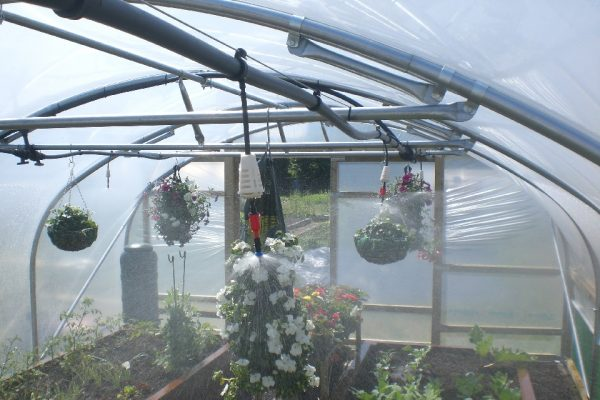 irrigation in a polytunnel