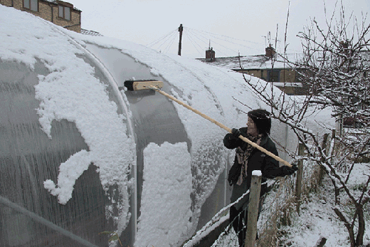 someone sweeping snow off a polytunnel with a long brush
