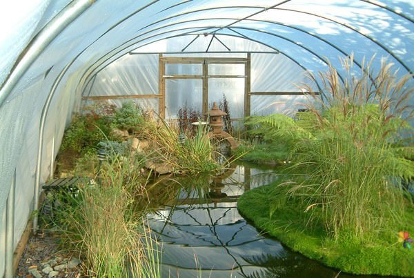 polytunnel pond