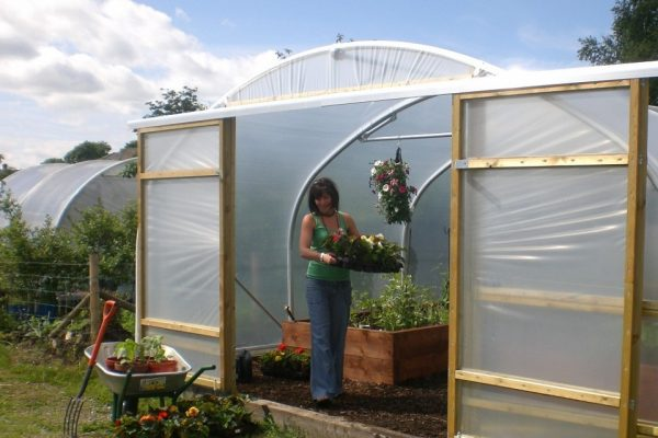 woman holding tray of flowers in a polytunnel