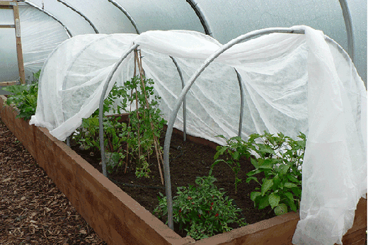 horticultural fleece over cloche hoops
