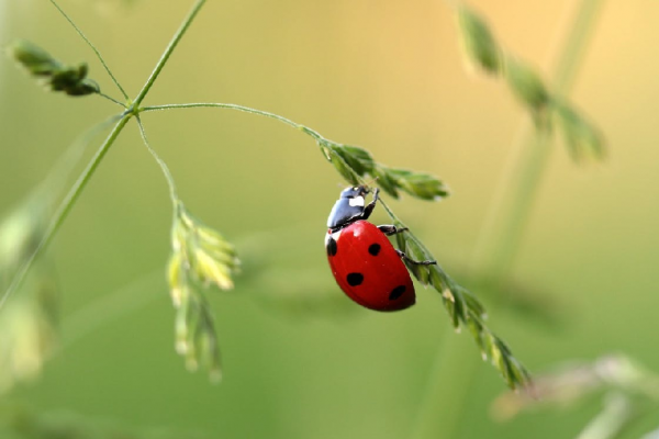 red ladybird on a plant
