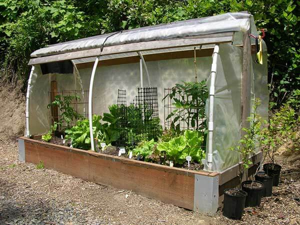 open mini polytunnel