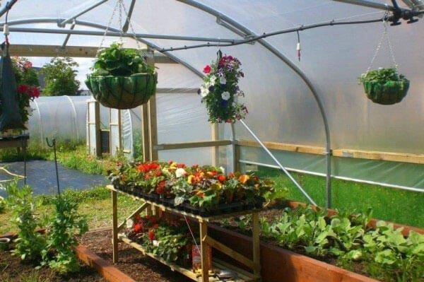 inside of a polytunnel
