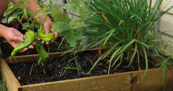 7 Benefits of a Polytunnel