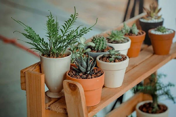 pots of succulents on wooden trestle staging
