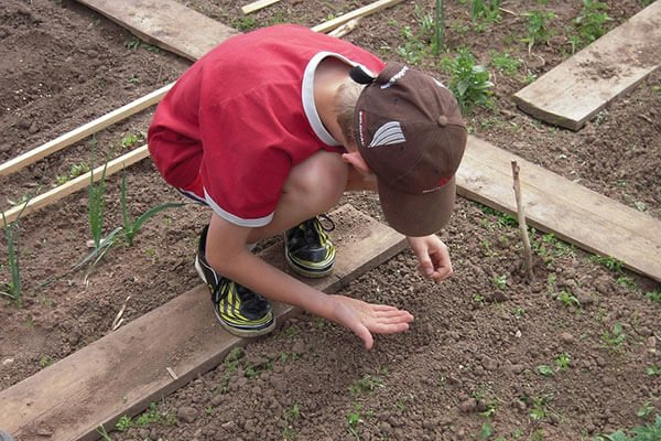 young boy sowing seeds in a garden