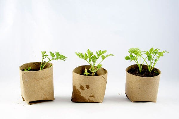 seedlings in biodegradable pots