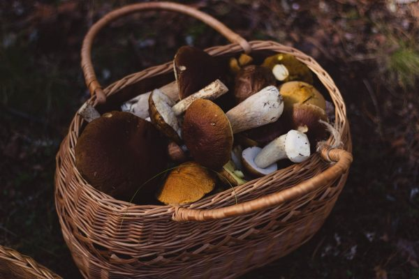 basket of mushrooms