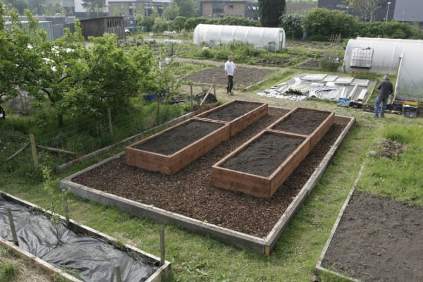 polytunnel layout