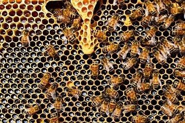 active bee hive