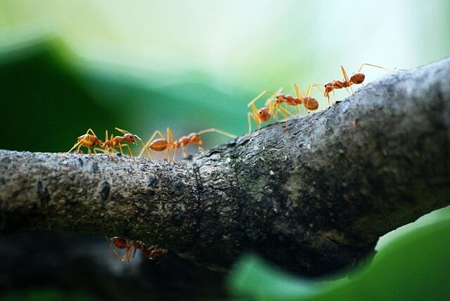 ants walking across a branch