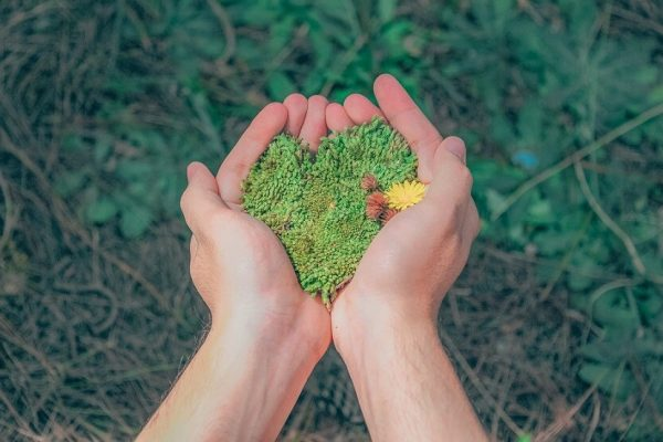 hands holding moss in a heart shape