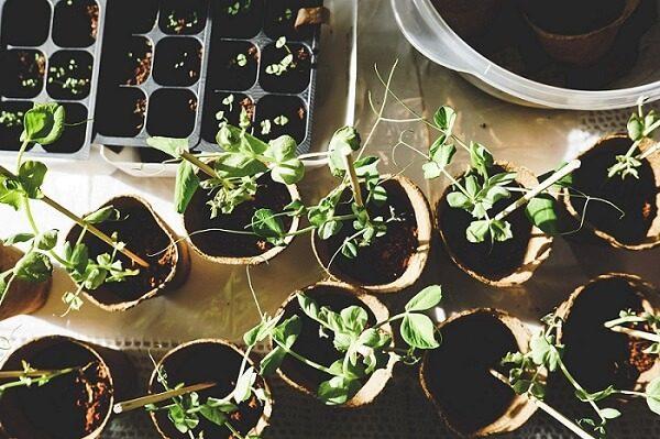 nitrogen rich plants