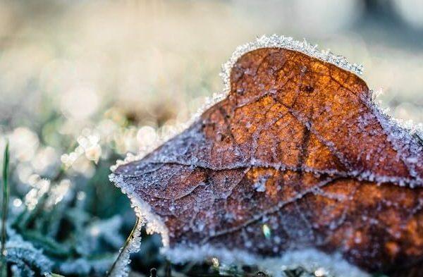 cropped frosty leaf