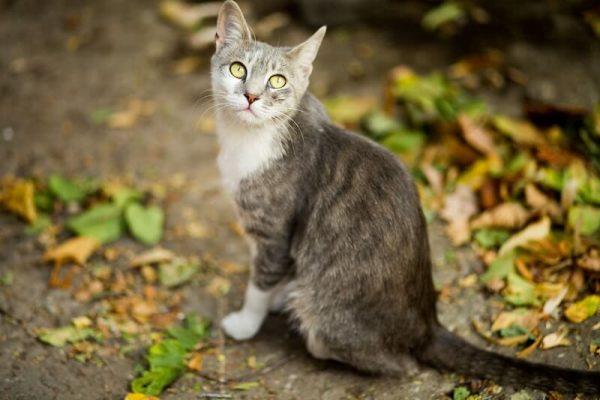 cat sat in a garden