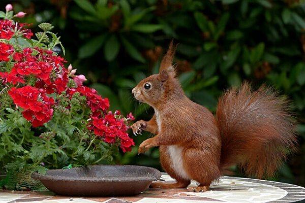 squirrel in a garden