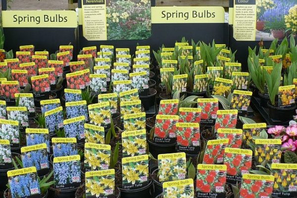 buying bulbs