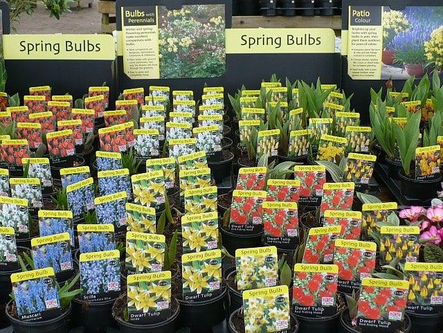 buying bulbs