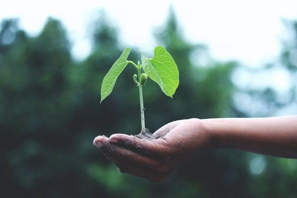 young plant in hand