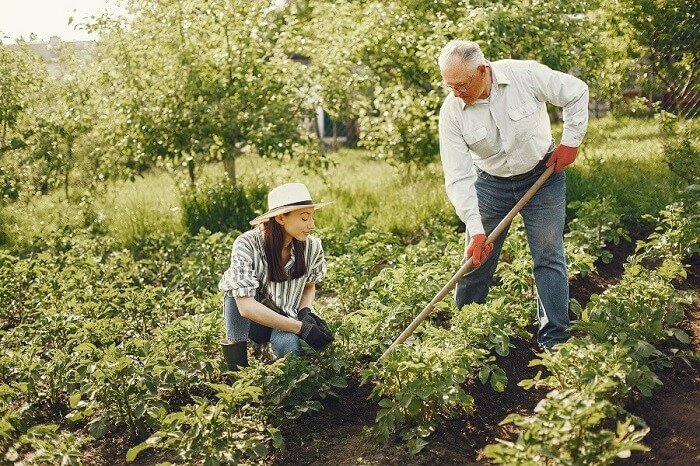 man and woman working in an allotment