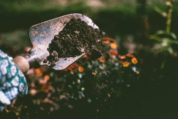 soil on trowel
