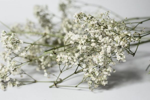 white elderflower