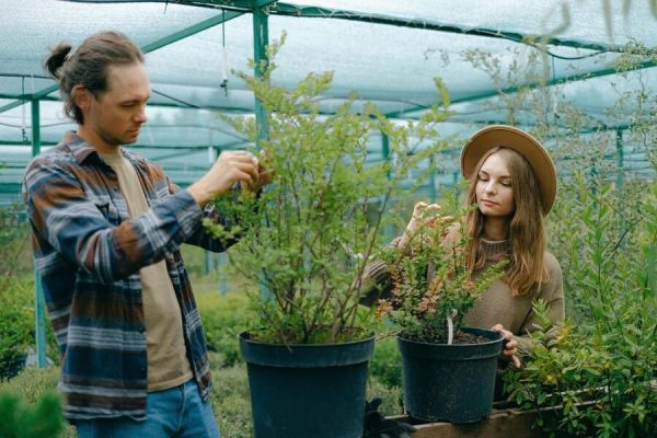 Two people growing in a greenhouse