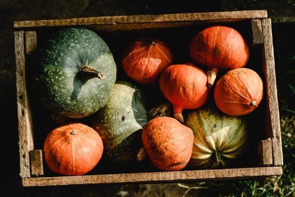 box of harvested squash
