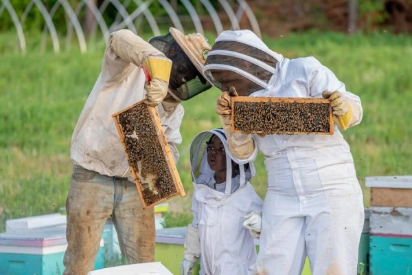 beekeeping family checking their bee hive